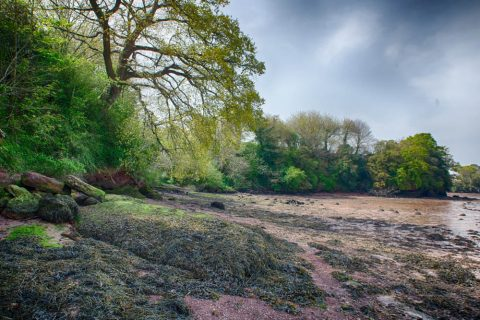 Photo of the shoreline of the River Teign