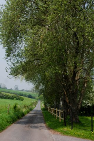 A photo of a country lane